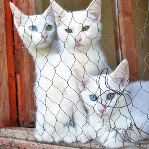 van kedi muzesi - Van da Gezilecek Yerler