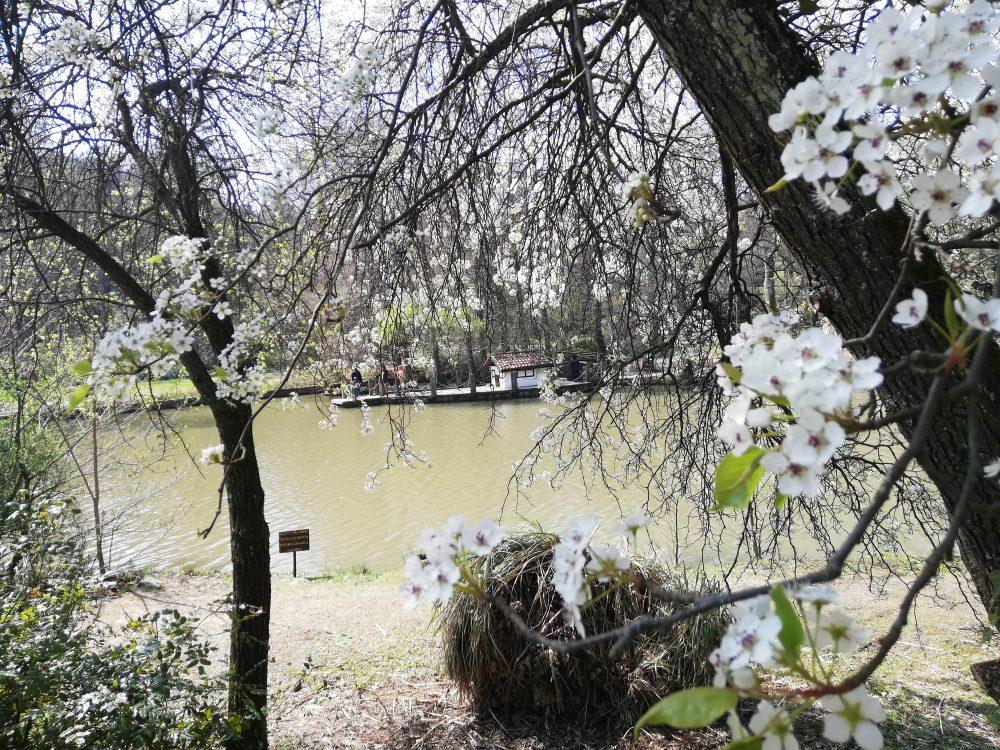 IMG 20190323 133504 1000x750 - Atatürk Arboretumu