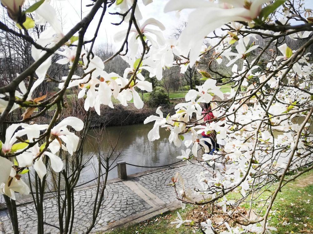 IMG 20190323 141647 1000x750 - Atatürk Arboretumu