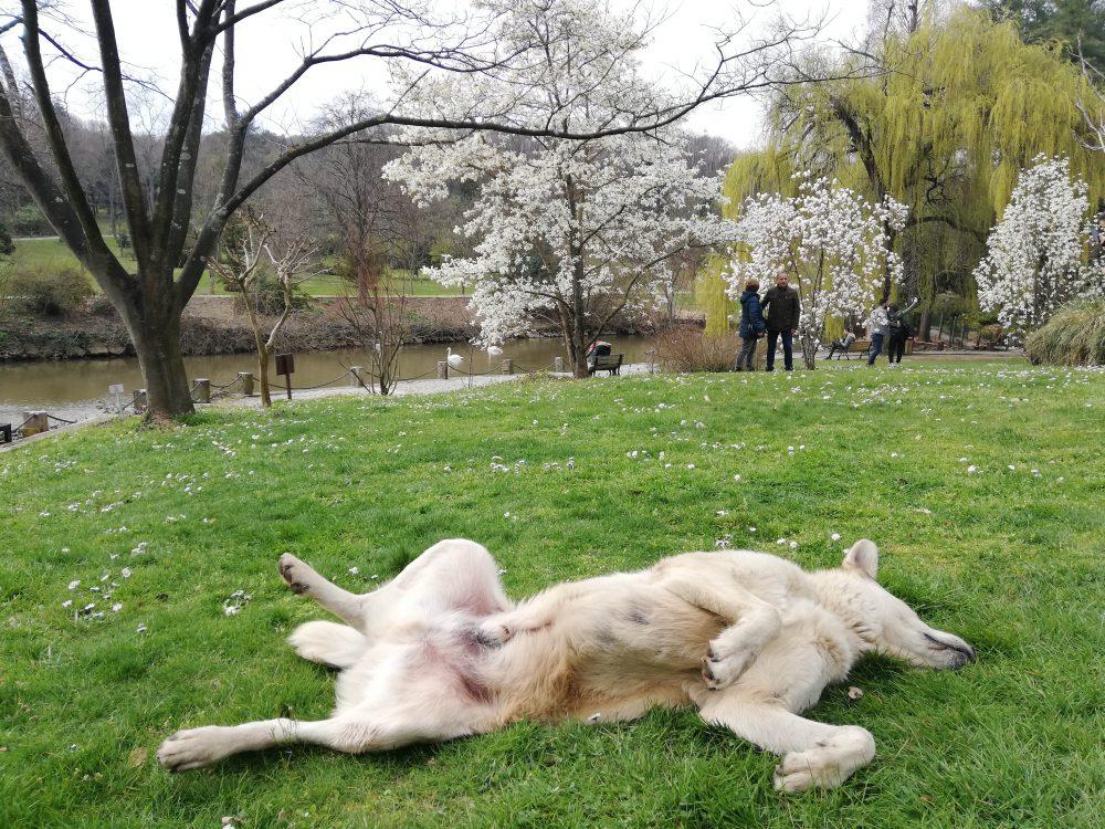 IMG 20190323 145719 1000x750 - Atatürk Arboretumu