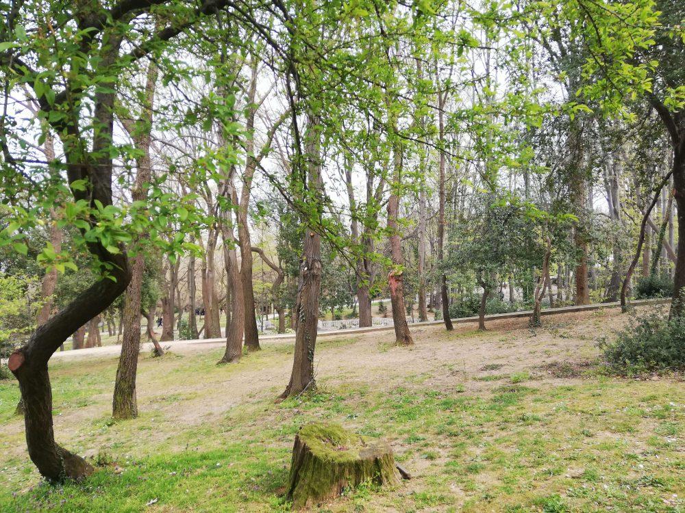 kucuk camlica orman 1000x750 - Çamlıca Tepesi